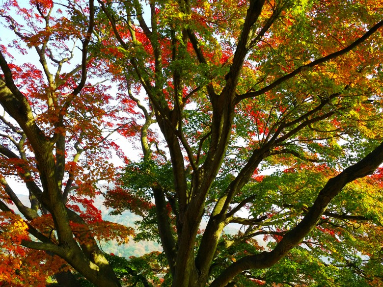 jinhae-eco-park-tree