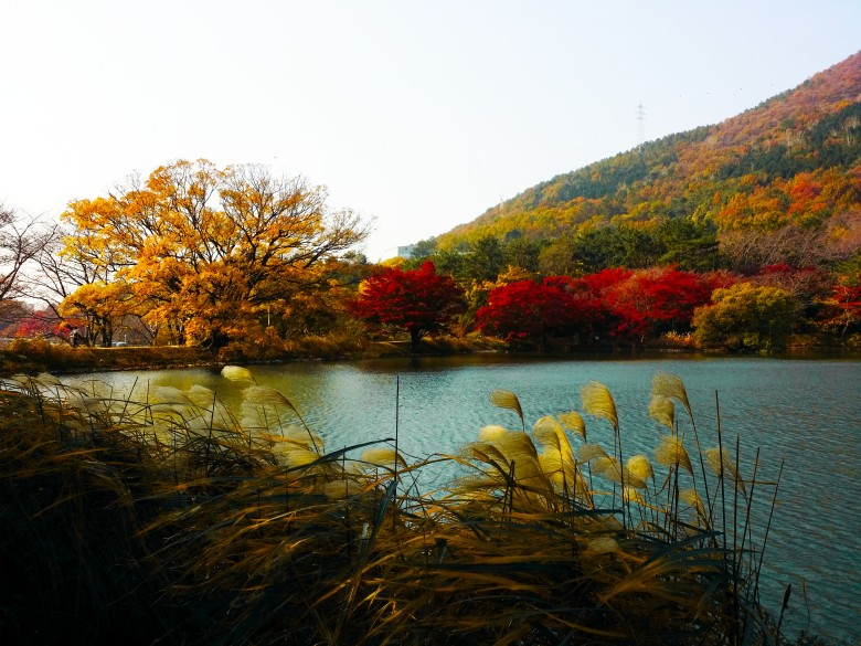 jinhae-eco-park